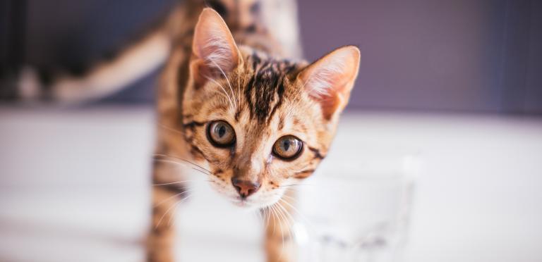 Kissanpentu Luovutusikä