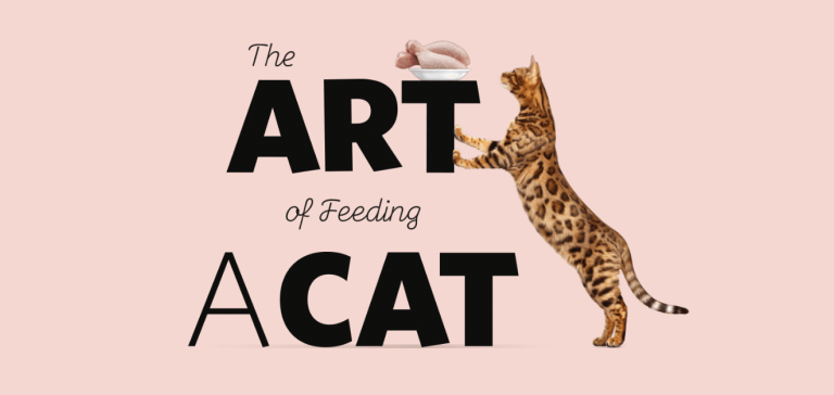The art Of feeding a Cat - PrimaCat